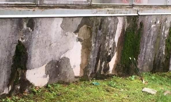 Organic Cement